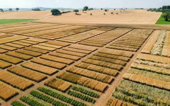 Giornate aperte nei nostri campi di cereali